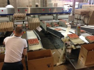 eggs veder supplies import export trade the netherlands angola luanda