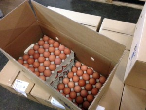 eggs veder supplies export import trade eieren angola luanda