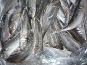 veder supplies frozen fish